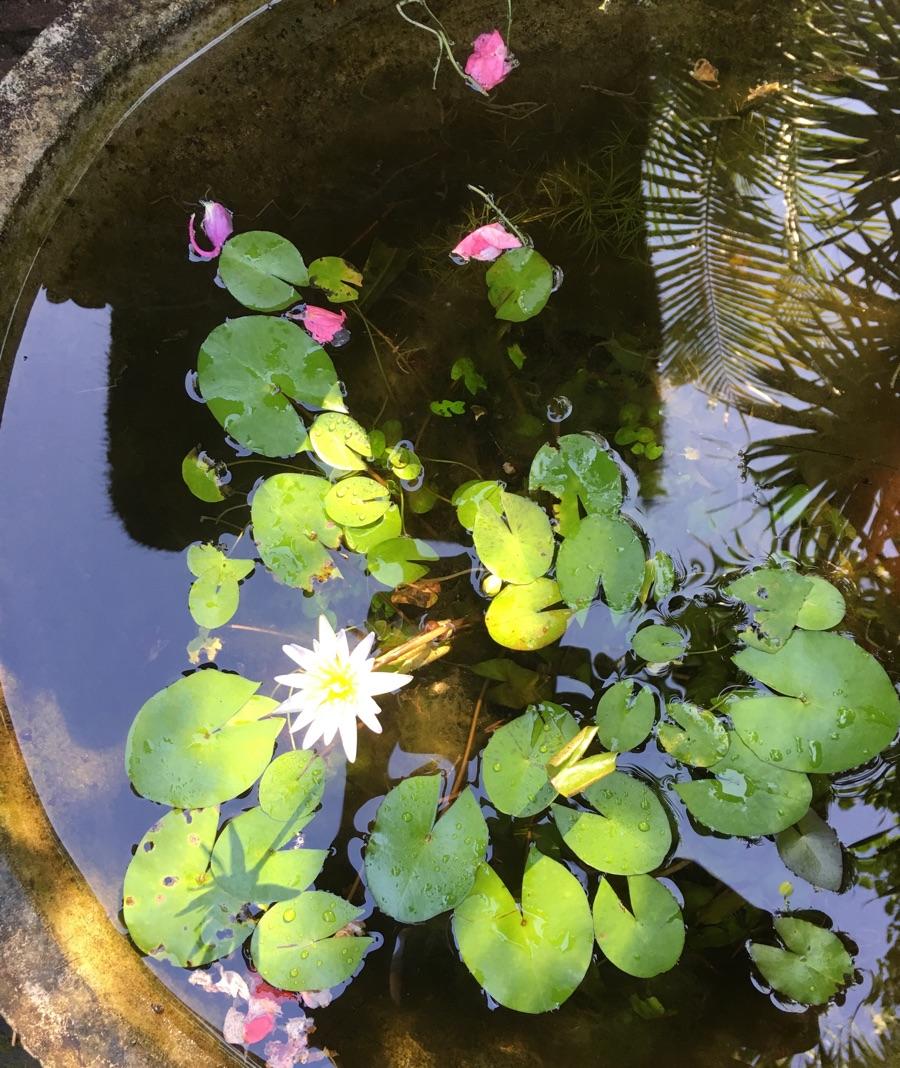 Bali garden garden design inspiration