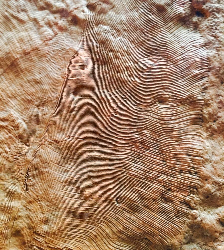 Parachilna flinders ranges South Australia ediacara travel