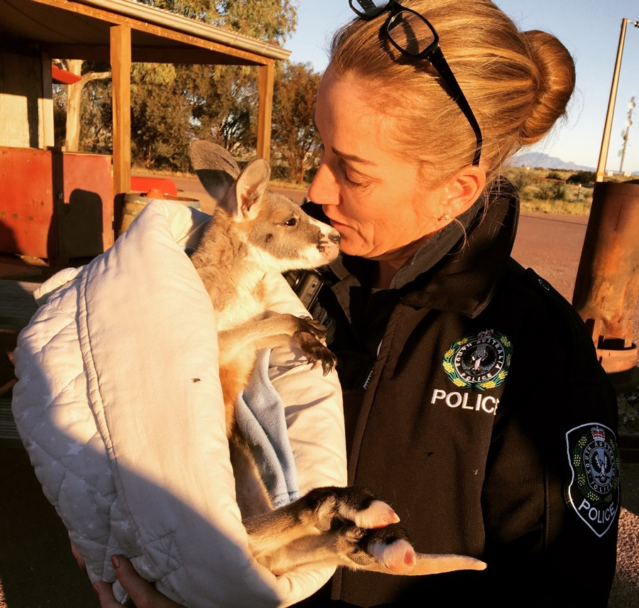 Australia travel wildlife kangaroo