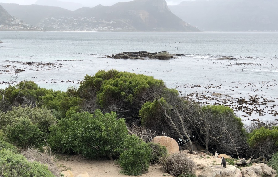 South Africa national park stone travel